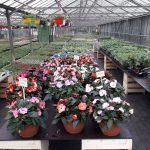 Horticulture Hautenauve SRL